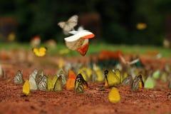 La mariposa colorida en la tierra Imagenes de archivo