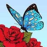 La mariposa con el azul manchó las alas en las flores de rosas rojas en un fondo del cielo azul, bandera del vector, tarjeta, car Foto de archivo