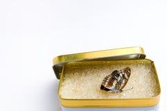 La mariposa de la muerte fotos de archivo