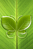 La mariposa deja eco amistoso en fondo de la hoja del plátano Foto de archivo libre de regalías