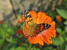 La mariposa en la flor Fotos de archivo libres de regalías
