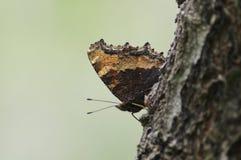 La mariposa en la rama Fotos de archivo libres de regalías
