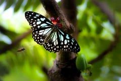 La mariposa en su hábitat natural Fotos de archivo libres de regalías