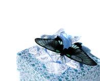 La mariposa en un rectángulo imagen de archivo libre de regalías