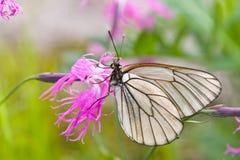La mariposa en una flor imagen de archivo libre de regalías
