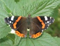 La mariposa en una ortiga Fotografía de archivo libre de regalías