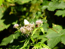 La mariposa, flor, abeja, se va Fotos de archivo libres de regalías