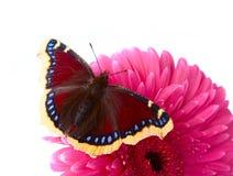 La mariposa hermosa Foto de archivo libre de regalías