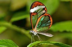 La mariposa hermosa con ve se va volando a través foto de archivo