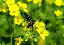 La mariposa hermosa en la flor foto de archivo