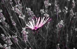 la mariposa hermosa en las flores foto de archivo