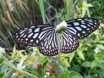 La mariposa salvaje de la naturaleza imagen de archivo libre de regalías