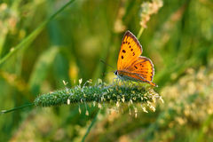 La mariposa se sienta en hierba verde Fotografía de archivo libre de regalías