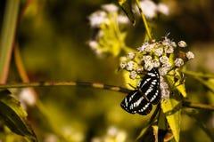 La mariposa se sienta en la hoja del yeallow Fotografía de archivo