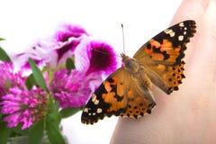 La mariposa se sienta en la mano Fotografía de archivo libre de regalías