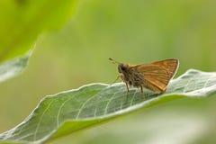 La mariposa se sienta en la planta fotos de archivo
