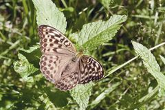 La mariposa se sienta en una hoja Fotos de archivo