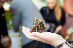 La mariposa se sienta en una mano humana Imagen de archivo