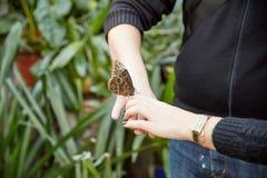 La mariposa se sienta en una mano humana Imagen de archivo libre de regalías