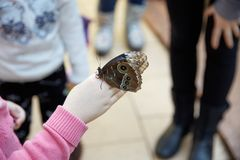 La mariposa se sienta en una mano humana Foto de archivo