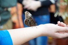 La mariposa se sienta en una mano humana Imágenes de archivo libres de regalías