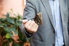 La mariposa se sienta en una mano humana Imagenes de archivo