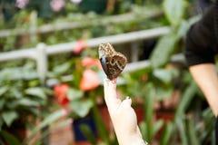 La mariposa se sienta en una mano humana Fotografía de archivo libre de regalías