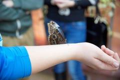 La mariposa se sienta en una mano humana Foto de archivo libre de regalías