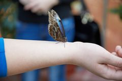 La mariposa se sienta en una mano humana Fotos de archivo