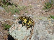 La mariposa se sienta en una piedra Fotografía de archivo libre de regalías