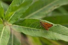La mariposa se sienta en una planta imagen de archivo