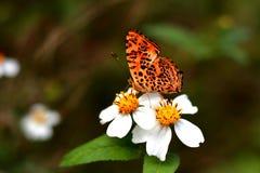 La mariposa y el fower Imágenes de archivo libres de regalías