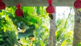 La mariposa y la abeja son néctar Imágenes de archivo libres de regalías