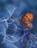 La mariposa y la flor Foto de archivo libre de regalías
