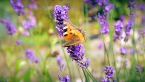 La mariposa y las abejas recogen el polen de flores almacen de video