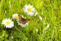 La mariposa y las flores Imagen de archivo