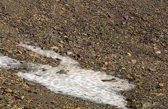 La marmotte blanchie (caligata de Marmota) est sur le champ de neige sur un m rocheux Photographie stock libre de droits