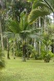 La Martinica, giardino del balata Fotografia Stock