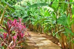 La Martinique, musée de banane de Sainte Marie dans les Antilles images libres de droits