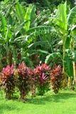 La Martinique, musée de banane de Sainte Marie dans les Antilles photographie stock