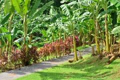 La Martinique, musée de banane de Sainte Marie dans les Antilles photos stock
