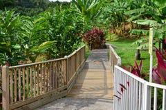 La Martinique, musée de banane de Sainte Marie dans les Antilles photo stock