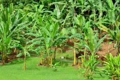 La Martinique ; musée de banane de Sainte Marie dans les Antilles images stock
