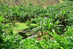 La Martinique, musée de banane de Sainte Marie dans les Antilles photo libre de droits