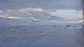 La masa de hielo flotante de hielo grande flota en el río el día de invierno almacen de metraje de vídeo