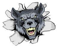 La mascota del lobo explota Fotografía de archivo libre de regalías