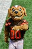 La mascotte de NFL mastique bruyamment Cleveland Browns Image libre de droits