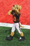 La mascotte di Cleveland Browns NFL mastica Fotografia Stock Libera da Diritti