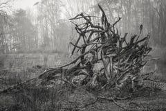 La masse de racine d'un arbre tombé Images libres de droits
