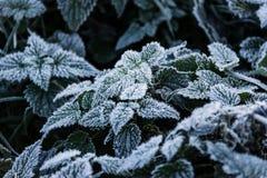 La mattina dell'inverno in anticipo Immagini Stock